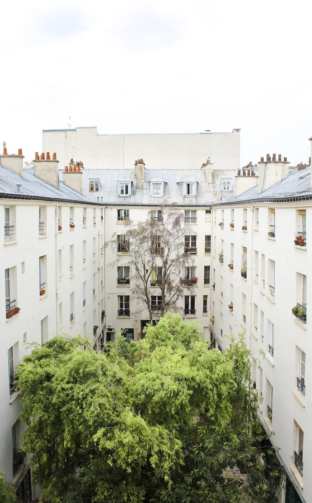 green trees between buildings