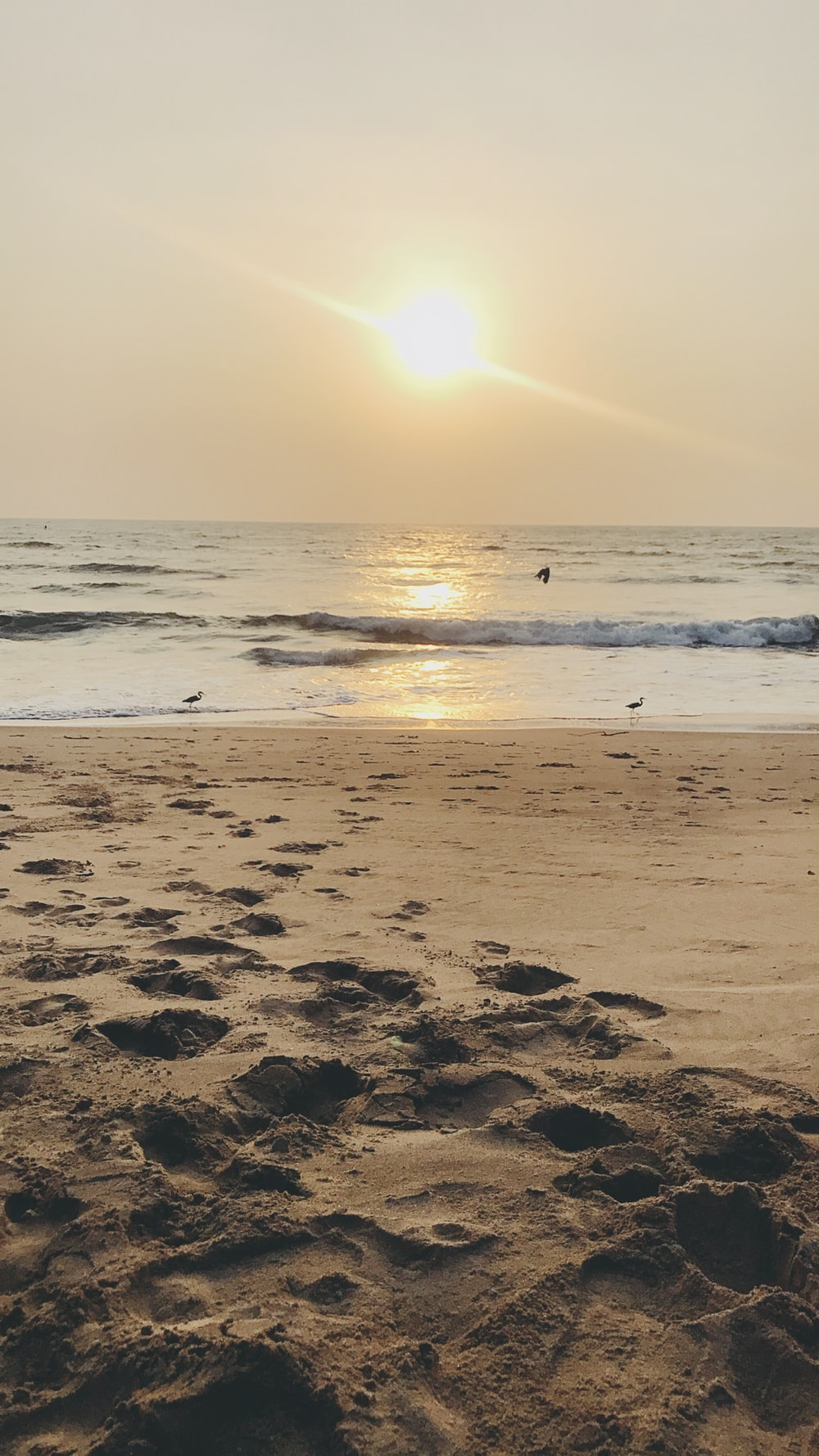 500 Goa Pictures Hd Download Free Images On Unsplash