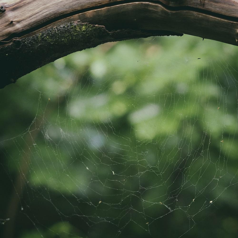 spider web on tree