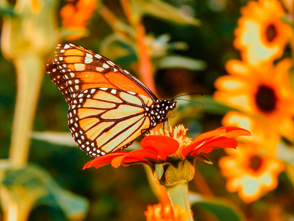 selective focus photography of orange and black butterfly