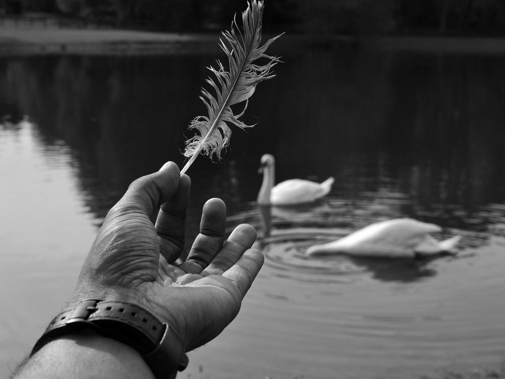 grayscale photography of person holding feather