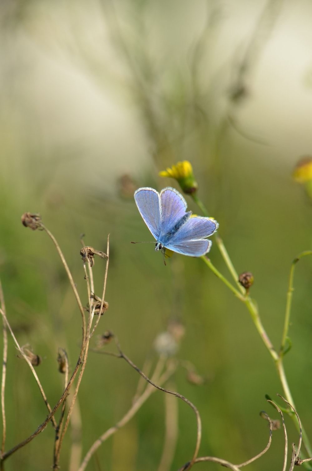 selective focus photography of blue butterfly