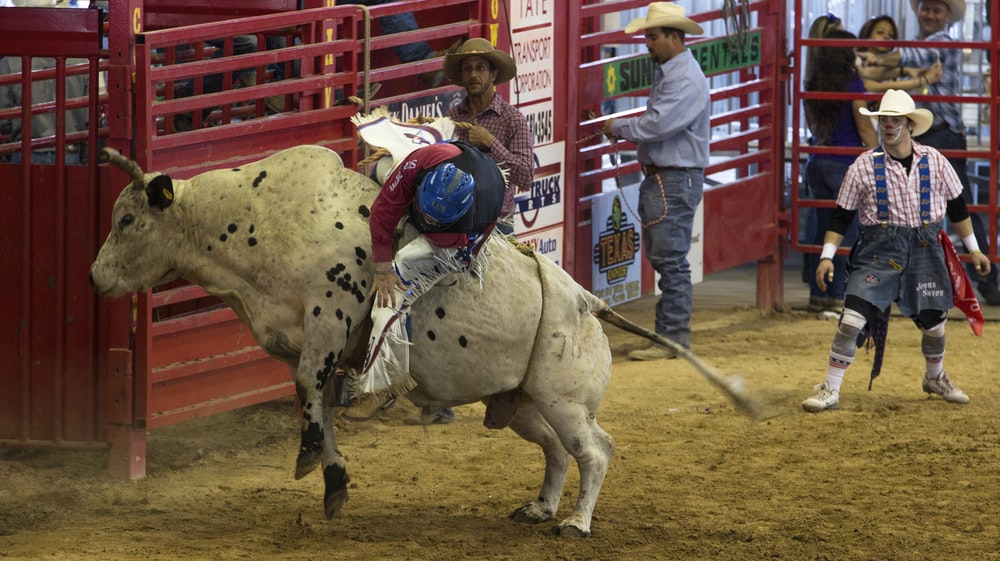 man on bull in rodeo