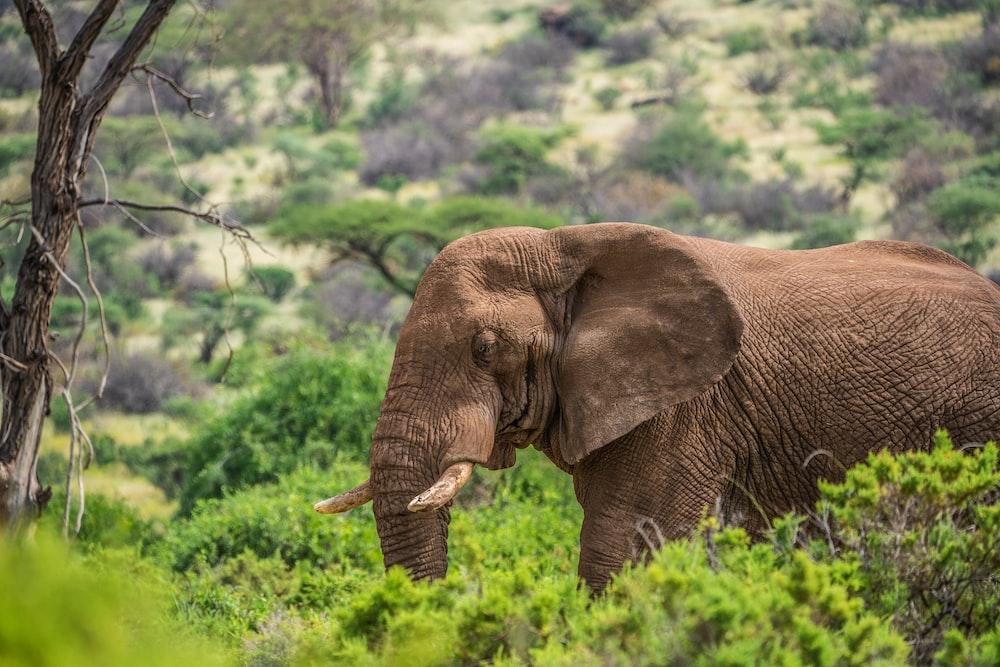 elephant standing on trees
