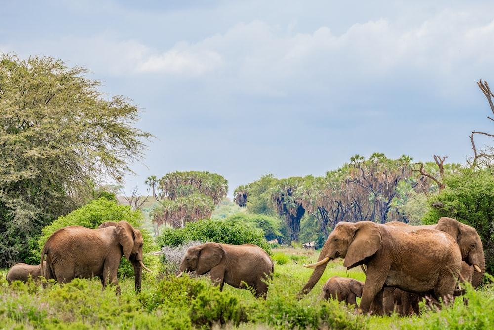 herd of elephants near trees
