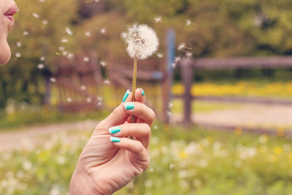person blowing white dandelion flower