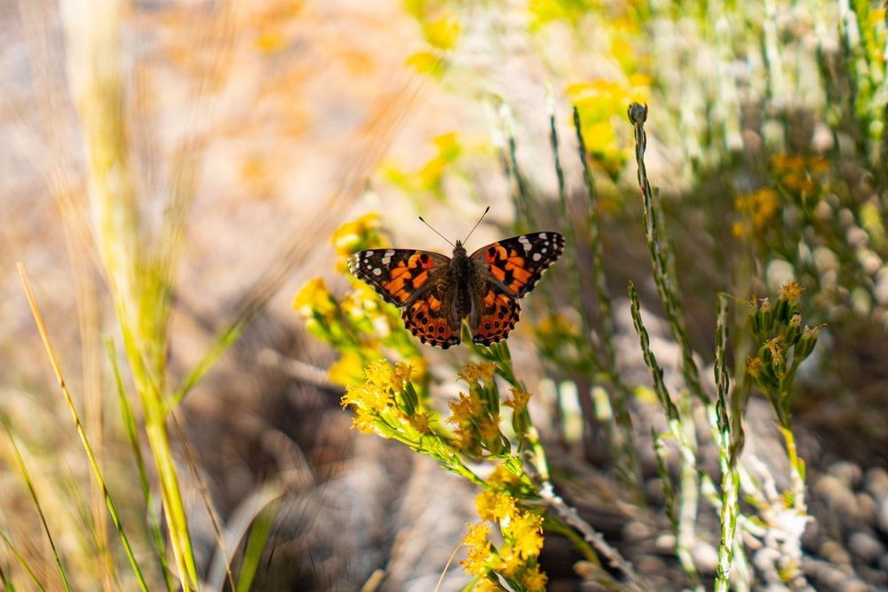 orange and black butterfly perching on yellow flower plant in selective-focus photography