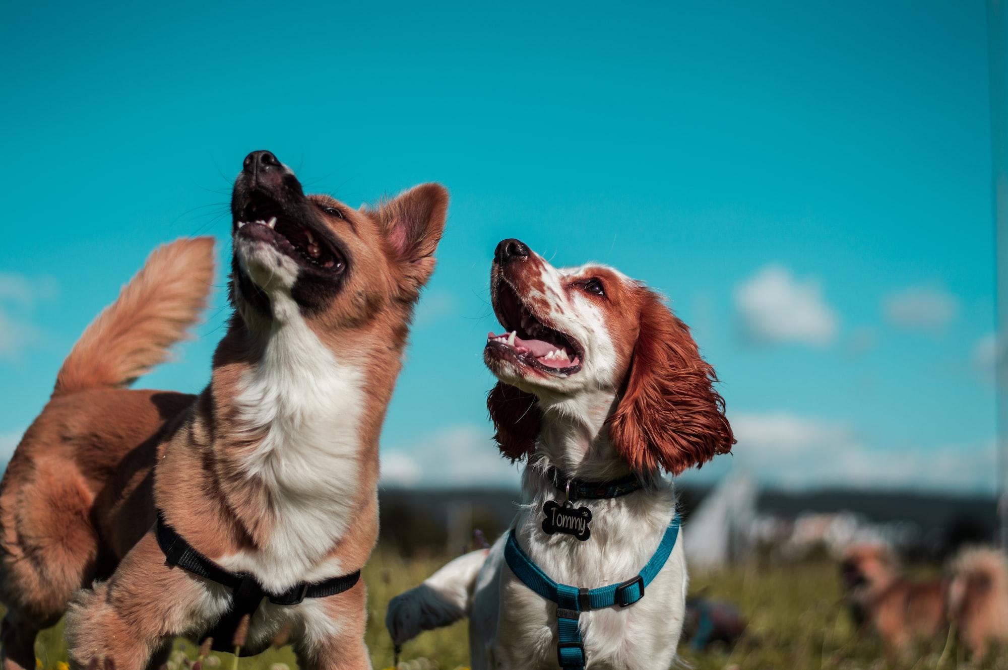 Come presentare due cani che dovranno vivere insieme