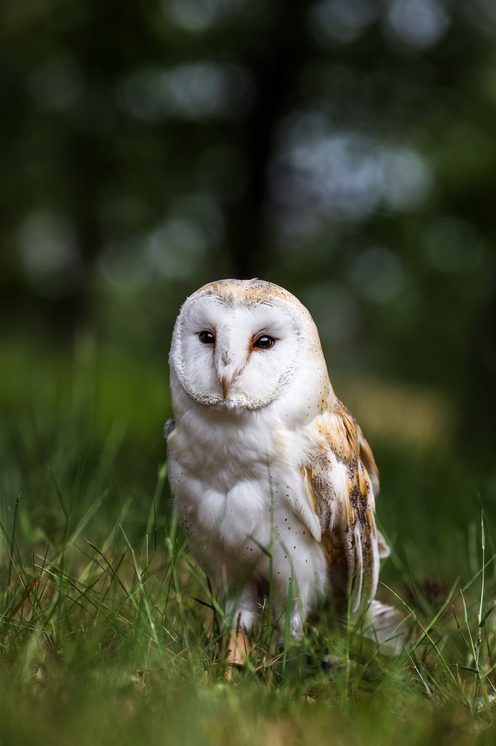 white and brown owl on grassy field