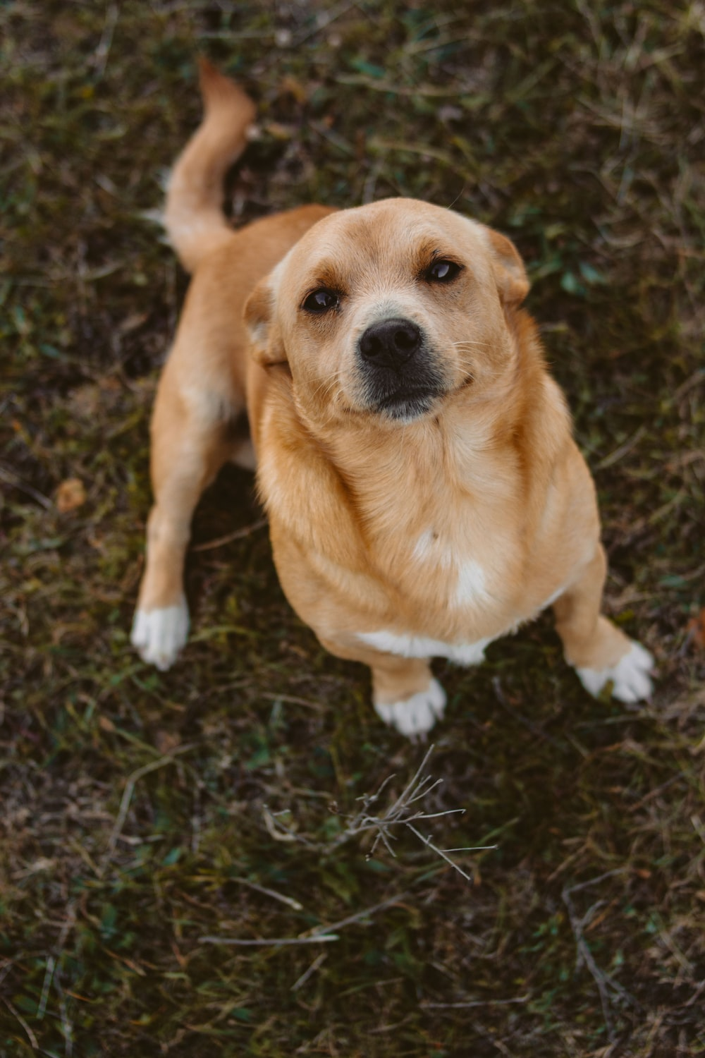 short-coated brown dog sitting on grass