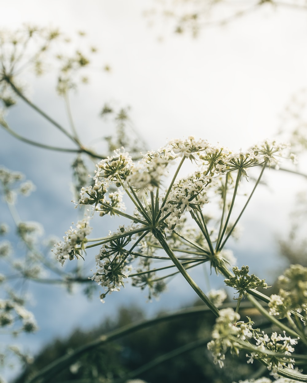 selective focus photo of white-petaled flowers