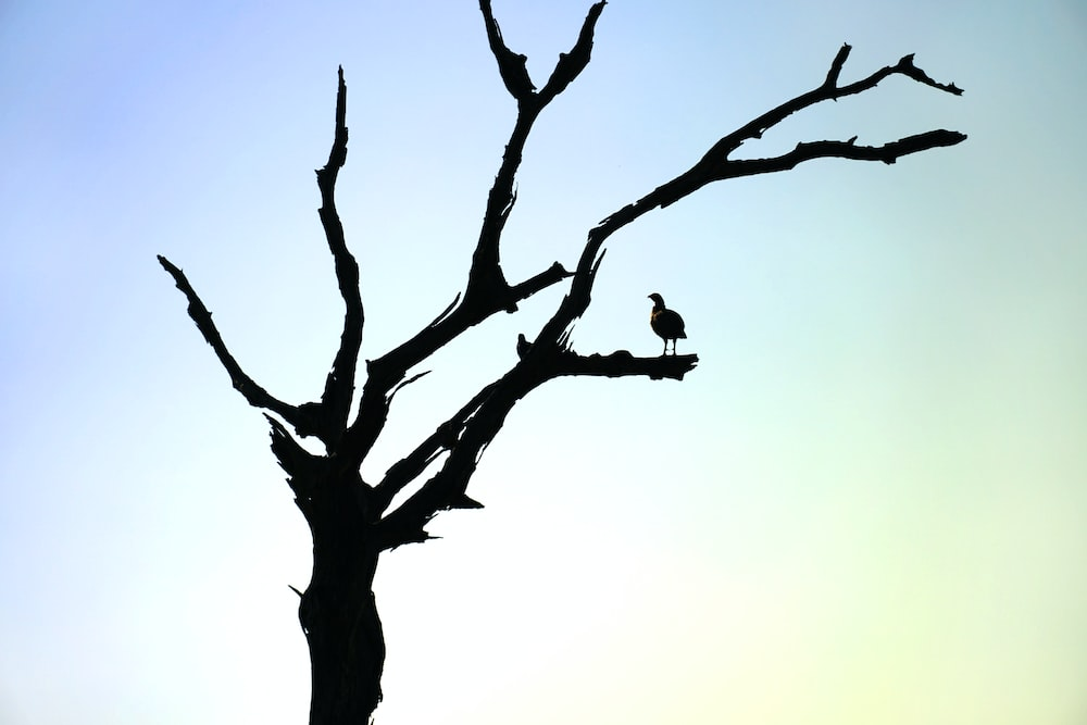 bird on leafless tree