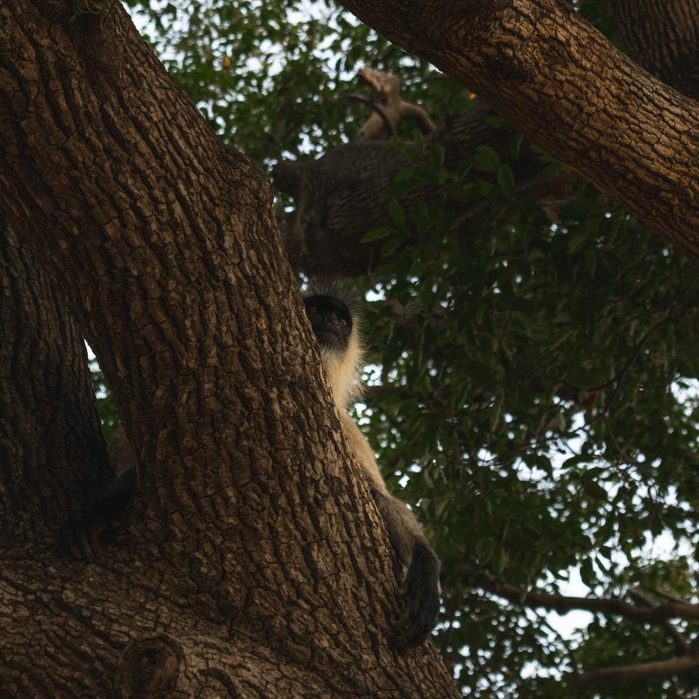 white and black monkey on tree