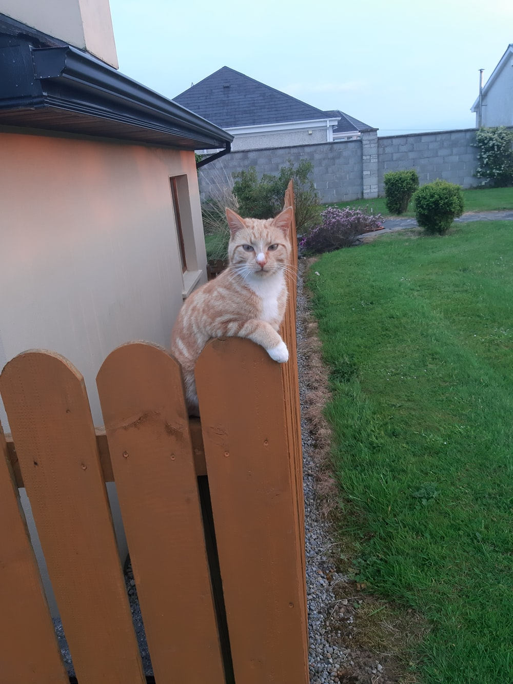 orange tabby cat on brown wooden fence