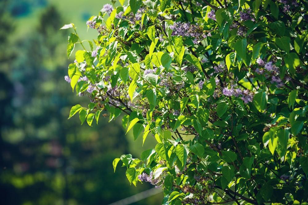 purple flowers im bloom