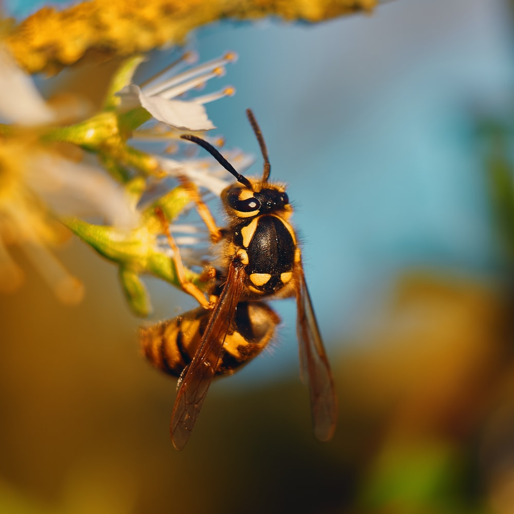 wasp perched on flower