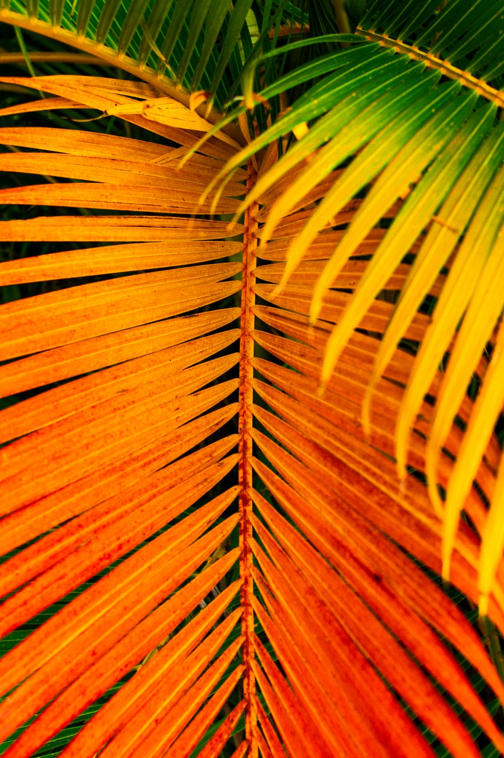 brown and green leaf