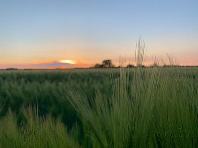 Cambridge green grass field