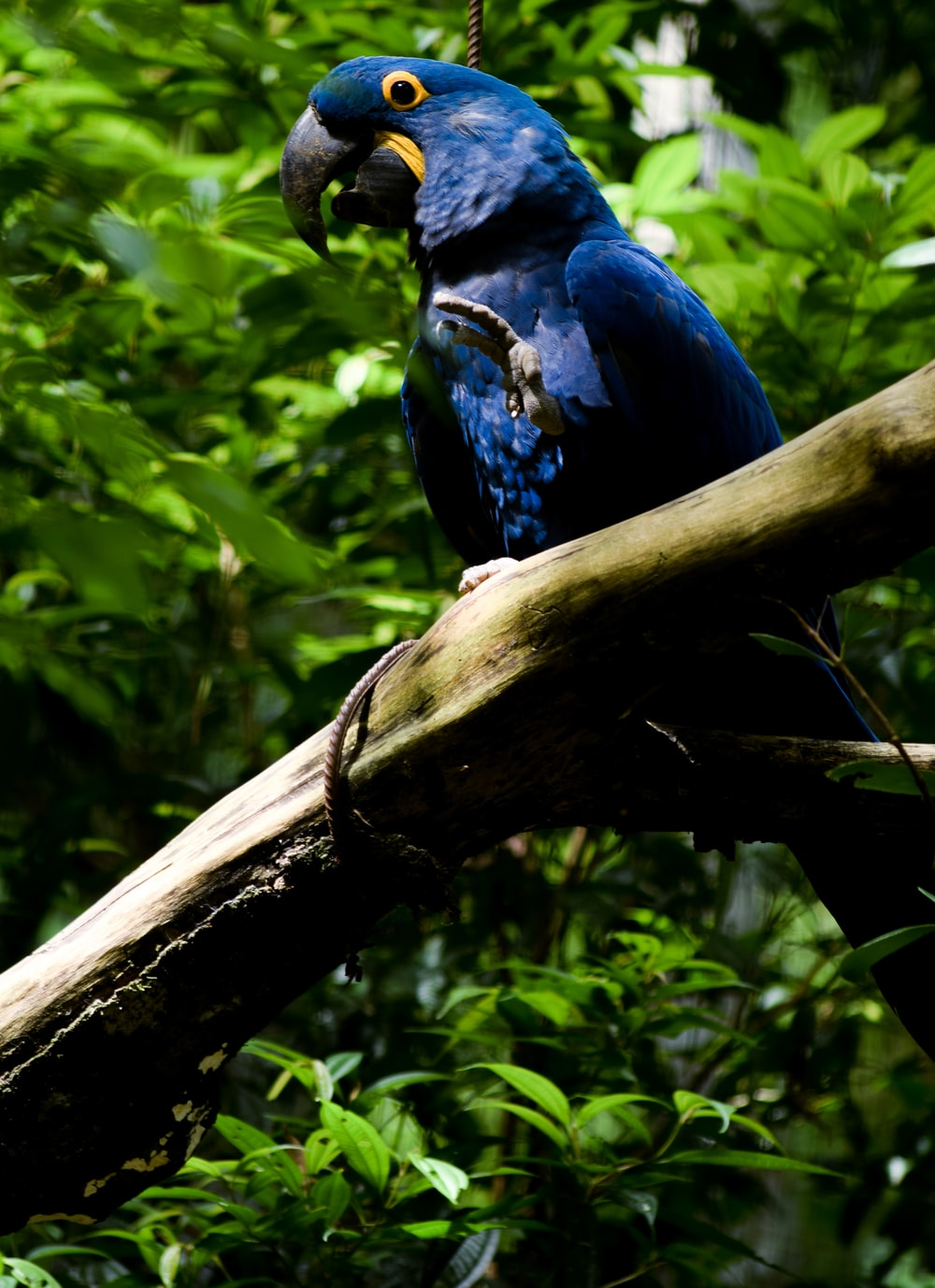 blue bird on tree