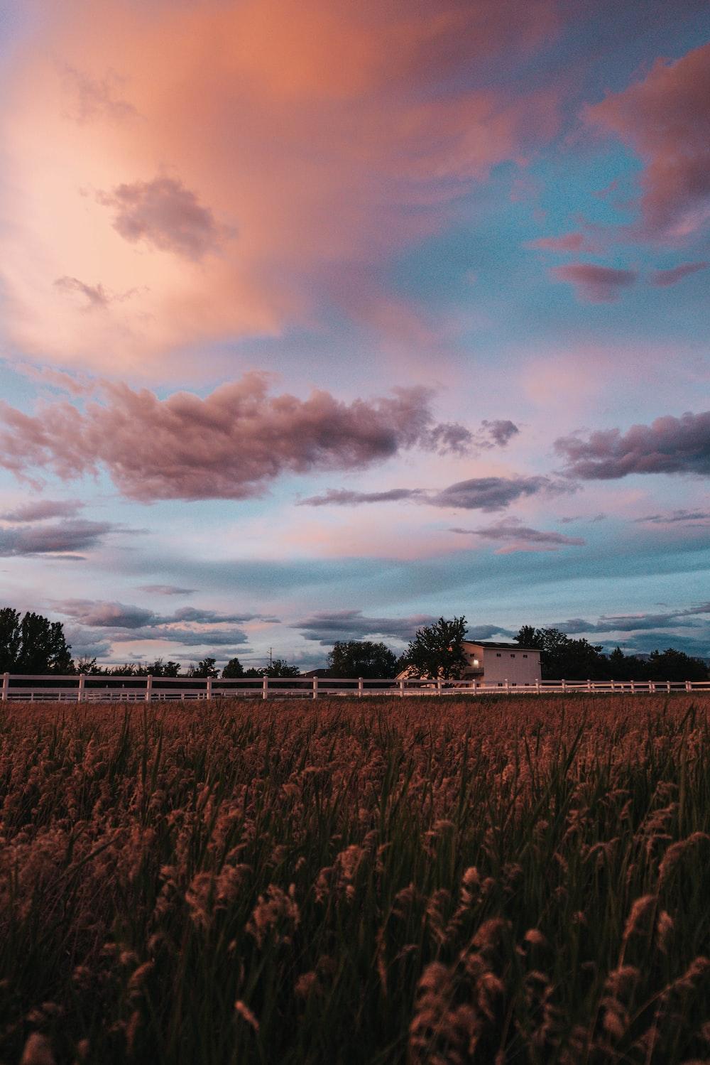 green field near house under orange and blue skies