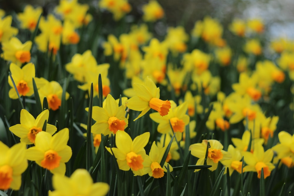 selective focus photography of yellow-petaled flowers