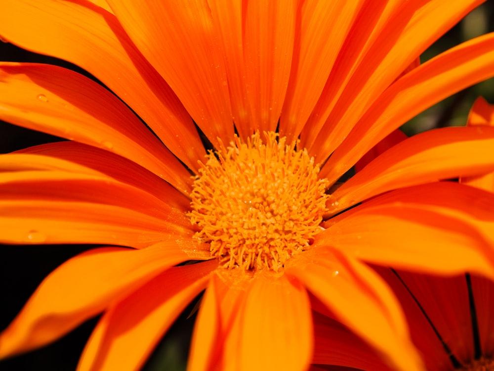 macro photo of yellow daisy flower