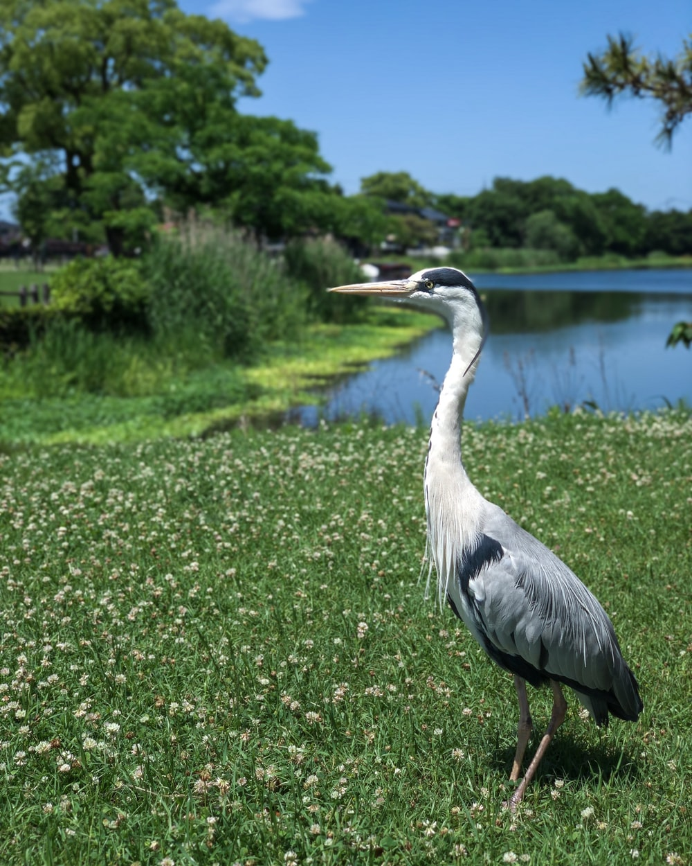 white and black bird beside lake