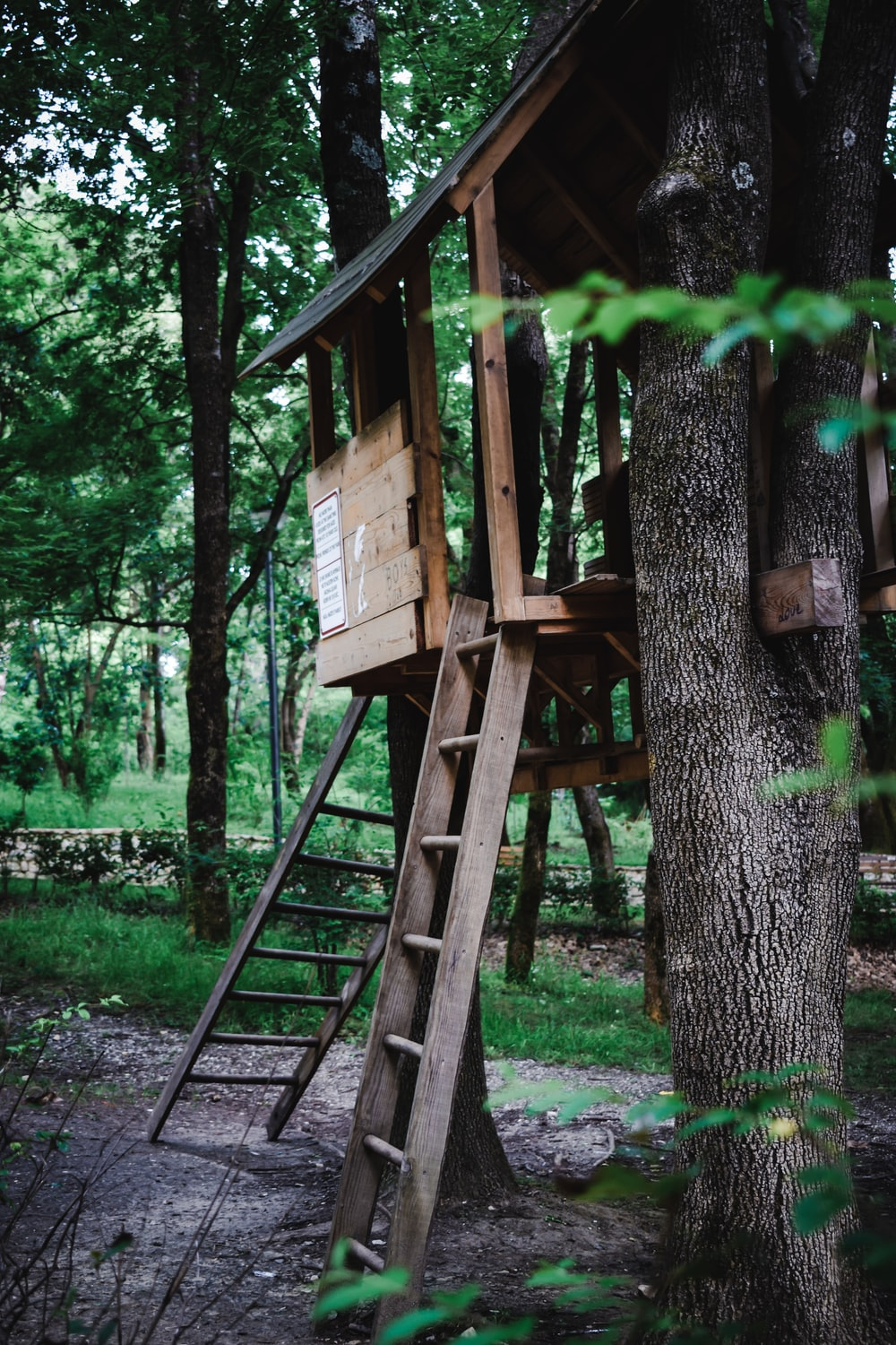brown wooden tree house