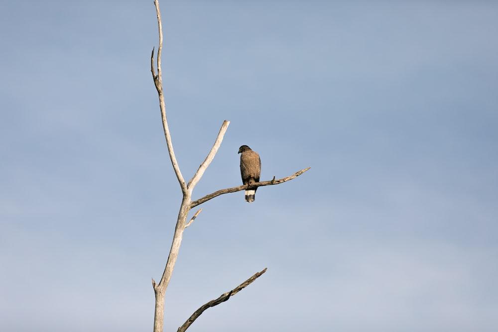 grey bird perching on tree branch