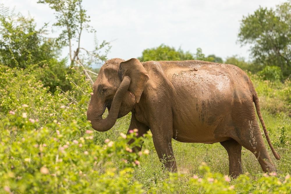 elephant grazing on grassland