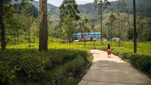 How to Plan a Trip to Nuwara Eliya