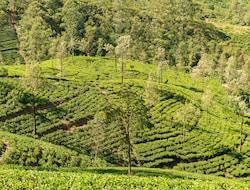 (Mittwochs): Kandy - Teeplantagen - Nuwara Eliya