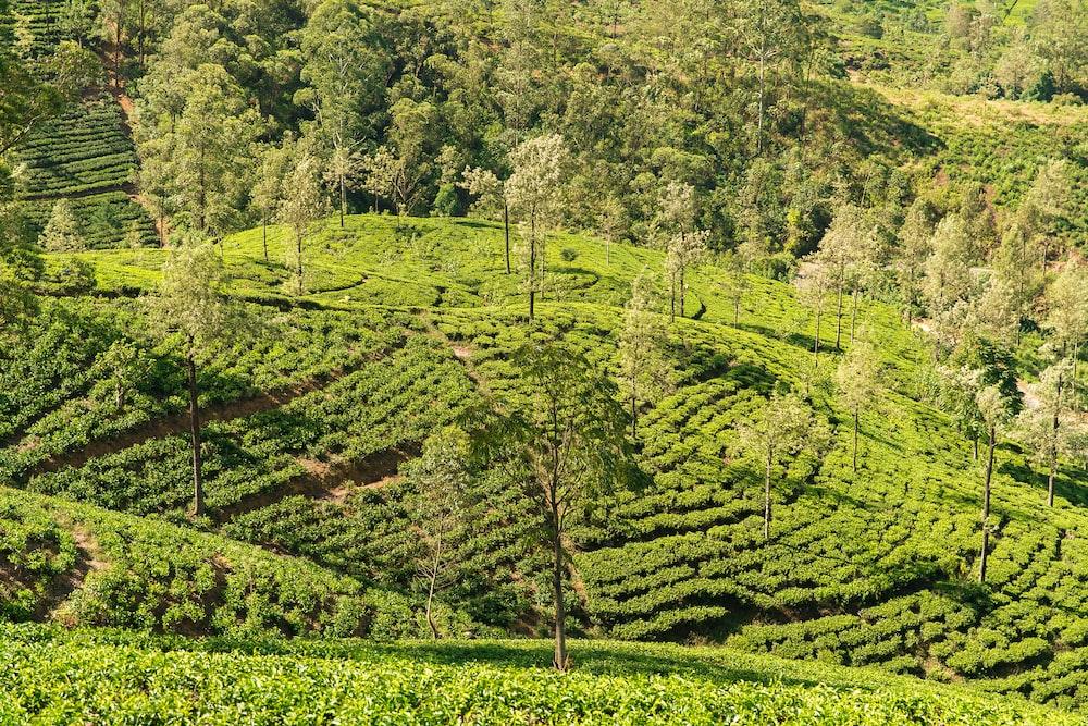 green farm on mountain slope