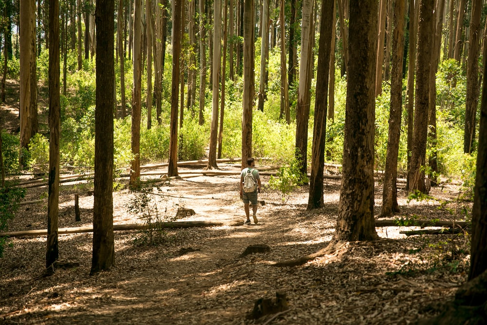 man walking on dirt trail at the woods