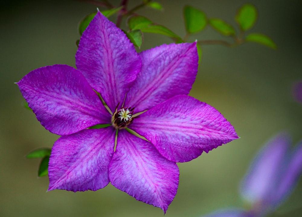 close-up photo of purple petaled flower