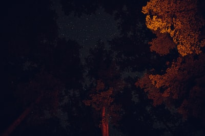 low angle photo of trees atmospheric teams background