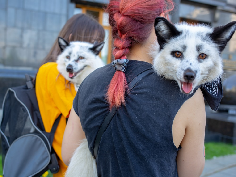 two women carrying white foxes during daytime