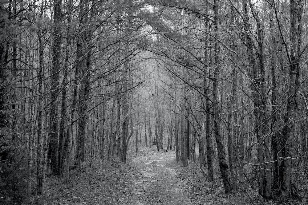 gray walkway under leafless trees