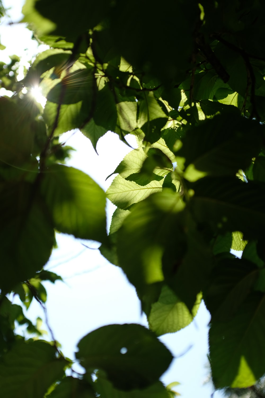 blue sky through green leaves