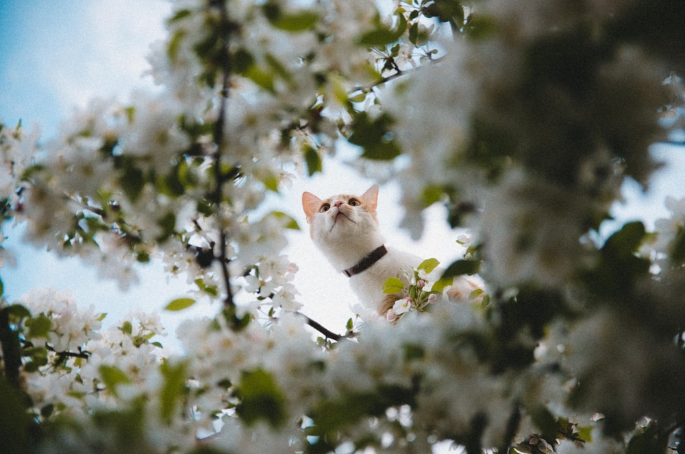 selective focus photography of short-fur white cat on tree