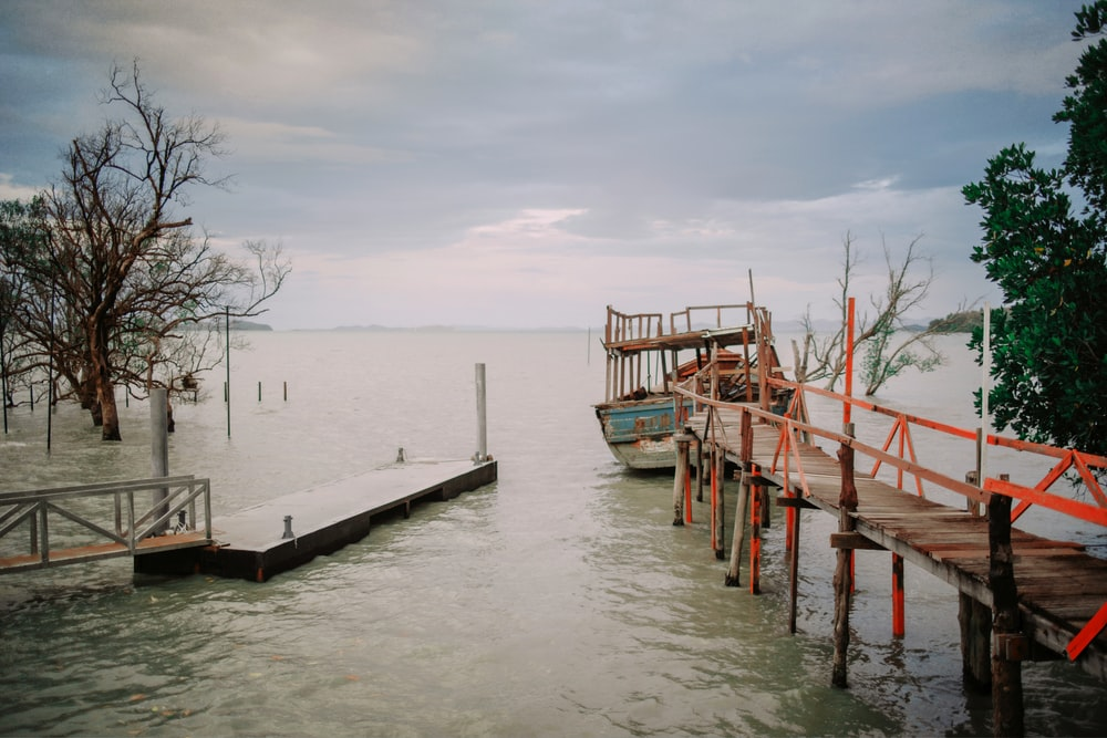 gray wooden dock beside trees