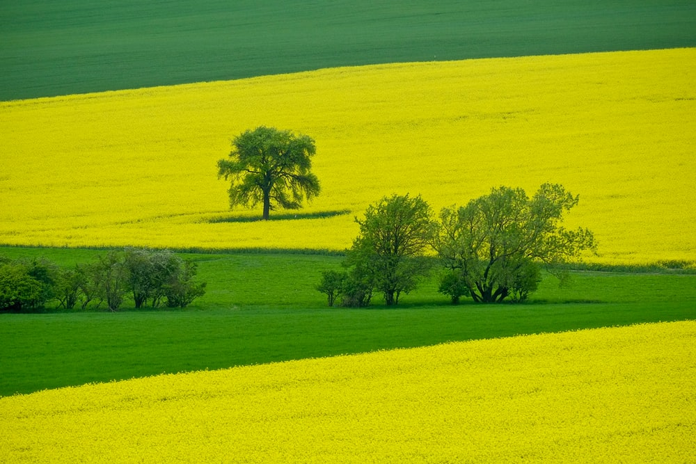 trees on green and yellow field
