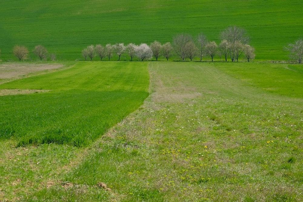 green grassy lawn