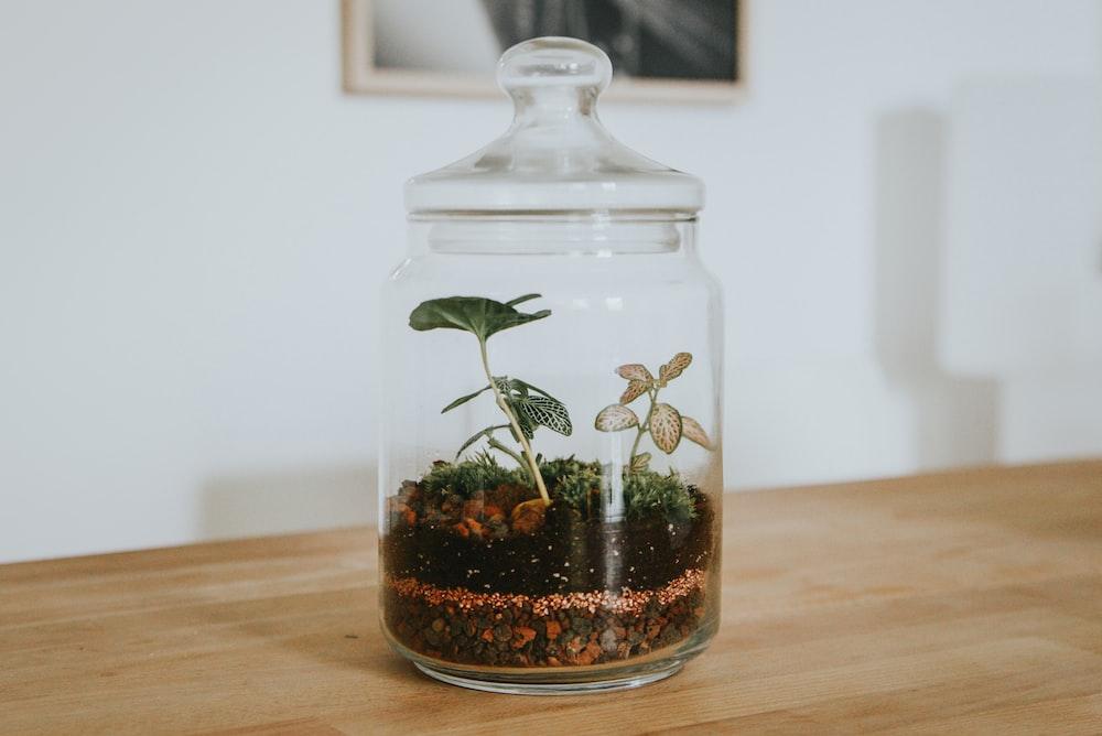 terrarium, bocal en verre avec une plante à l'intérieur