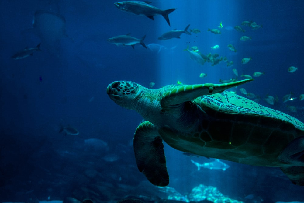 turtle and fishes underwater
