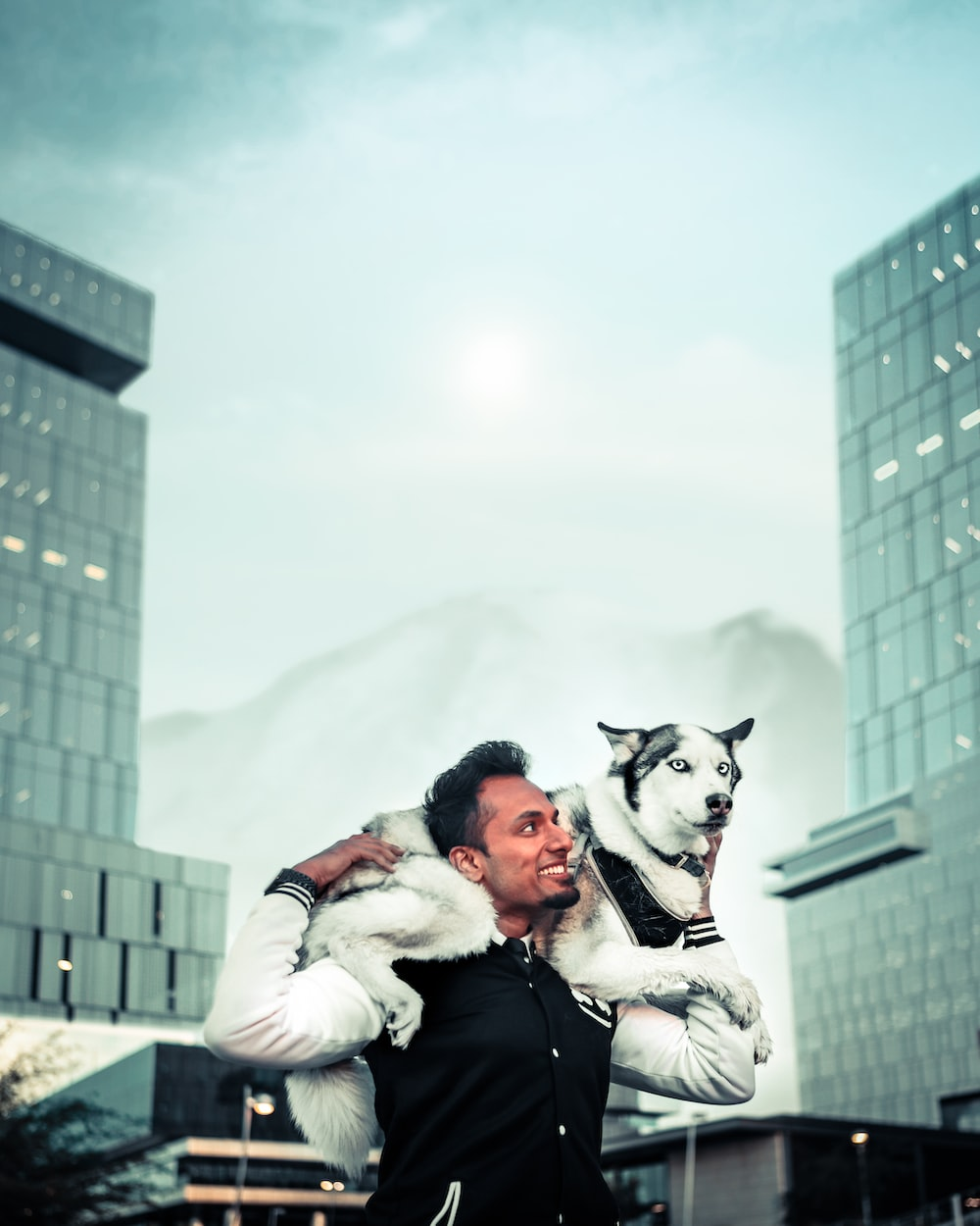 person carrying white Siberian husky
