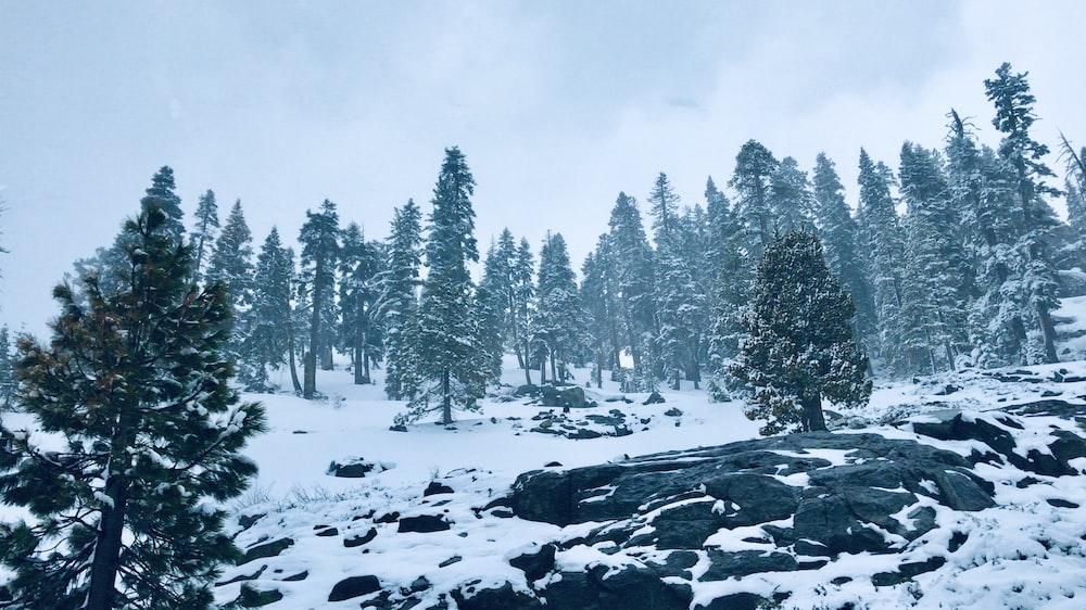 tree on snow