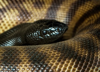 close-up photography of brown snake