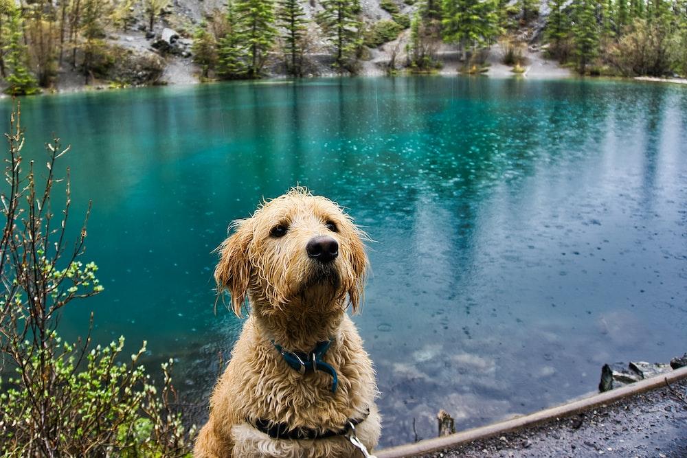 pet dog near body of water