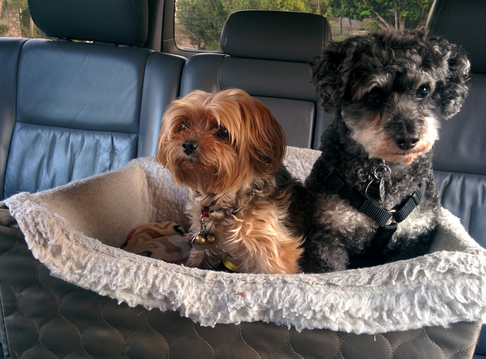 two dogs on pet bed in car